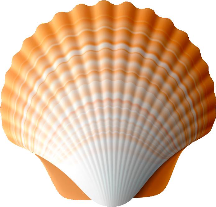zip snorkel colors